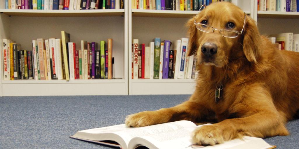 Ученая собака