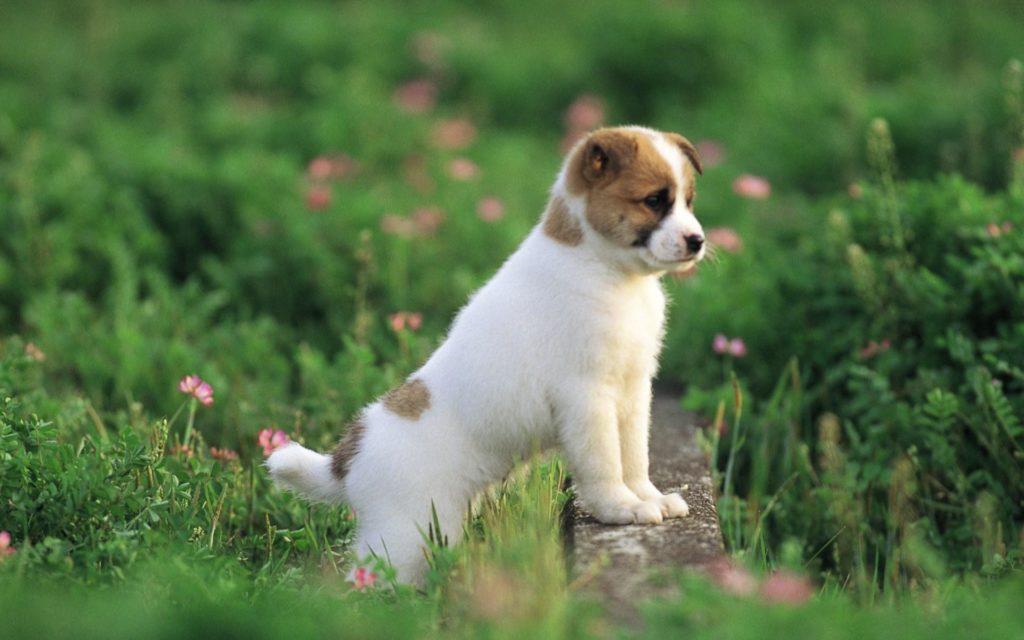 Собака на лугу
