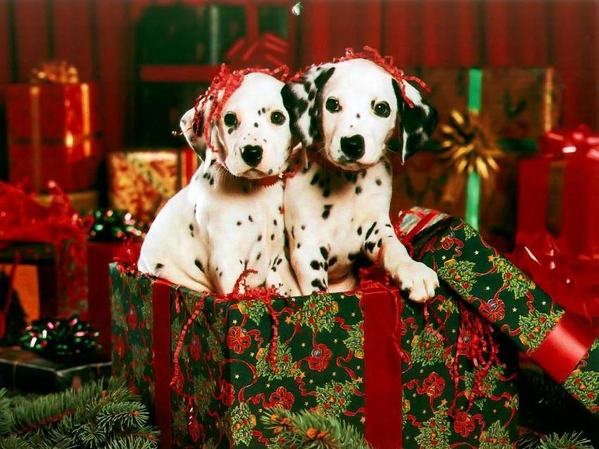 Новогодние собачки