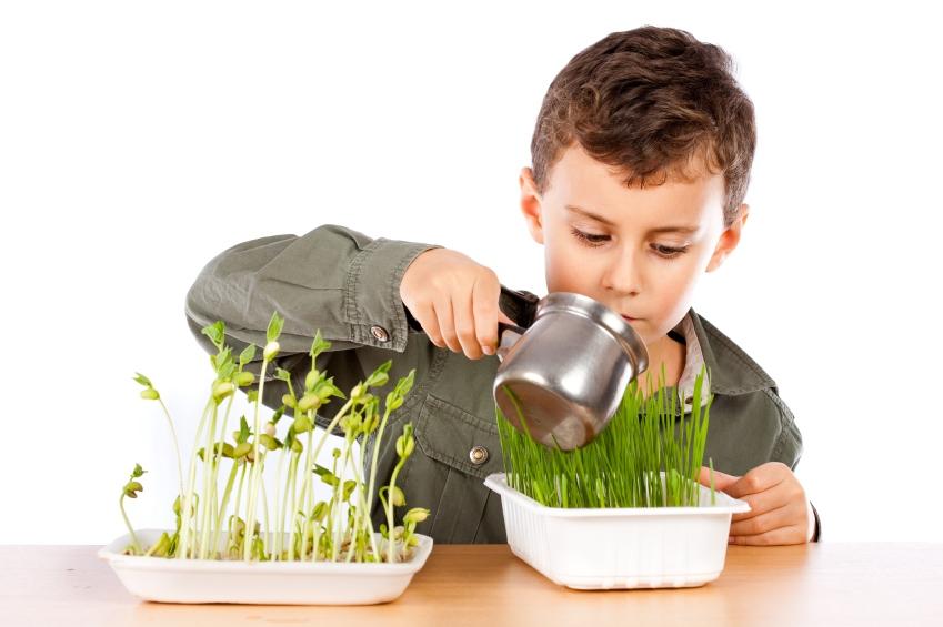 Мальчик поливает растения