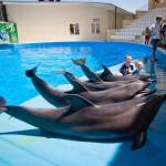 delfinarii