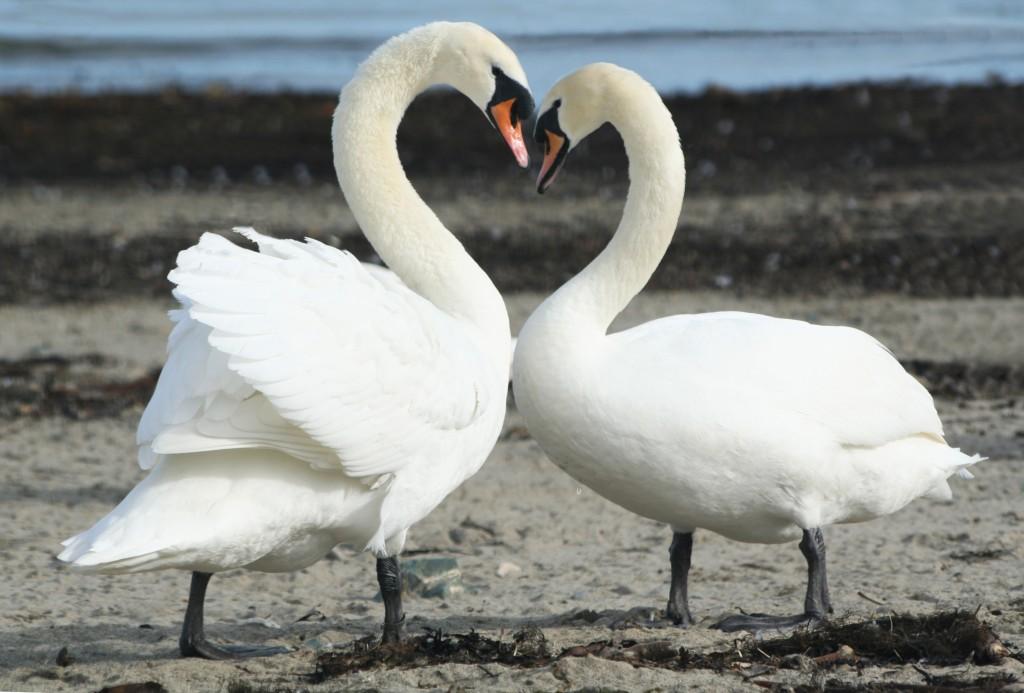 Любовные отношения Раков