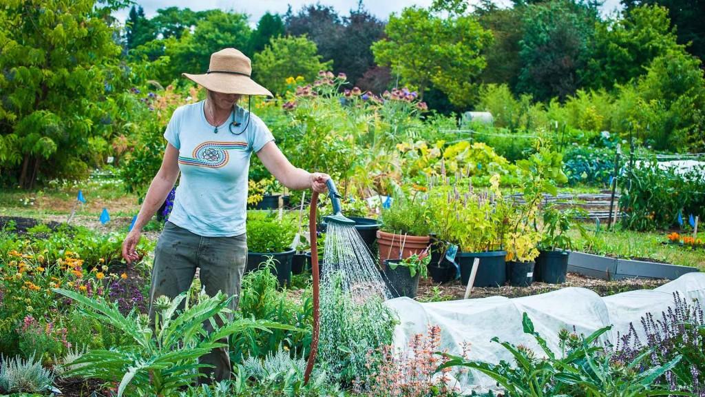 Новолуние для садоводов