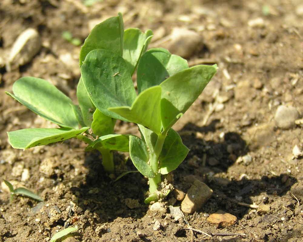 Молодые ростки